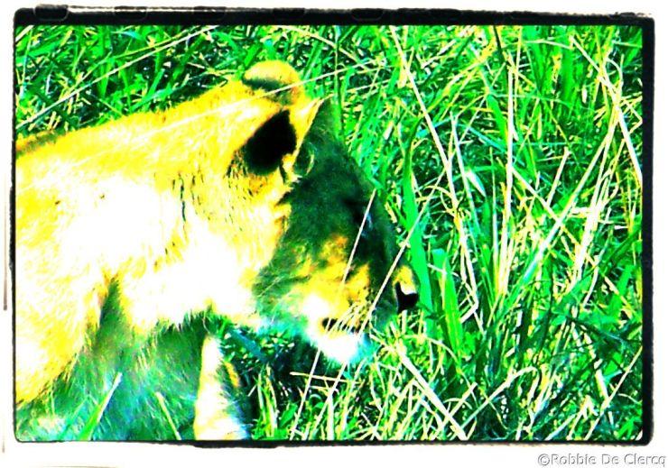 Serengeti National Park (95)