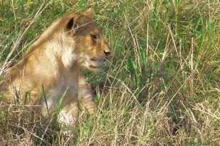 Serengeti National Park (96)