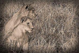 Serengeti National Park (97)