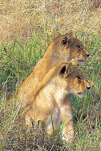 Serengeti National Park (98)