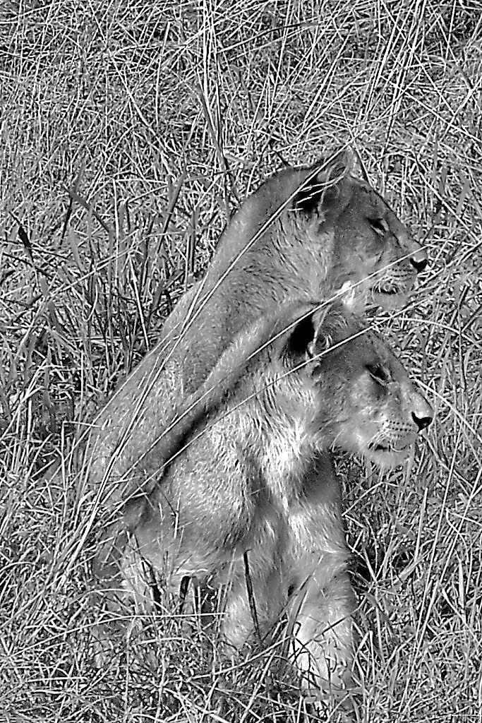 Serengeti National Park (99)