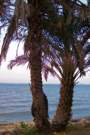 Speke Bay (14)