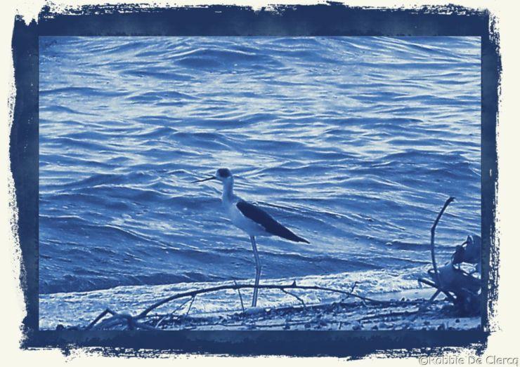 Speke Bay (25)