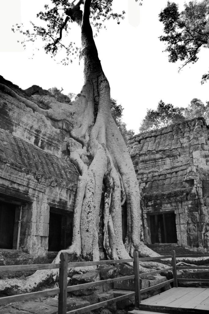 Ta Phrom (12)