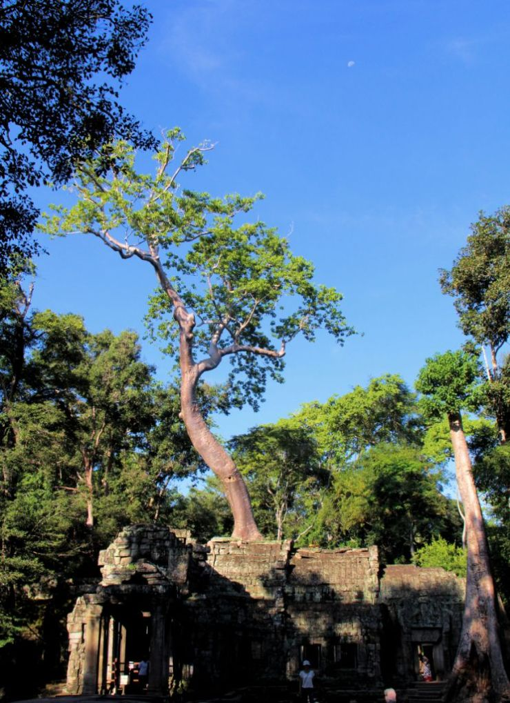 Ta Phrom (3)