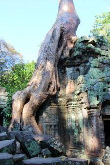 Ta Phrom (51)