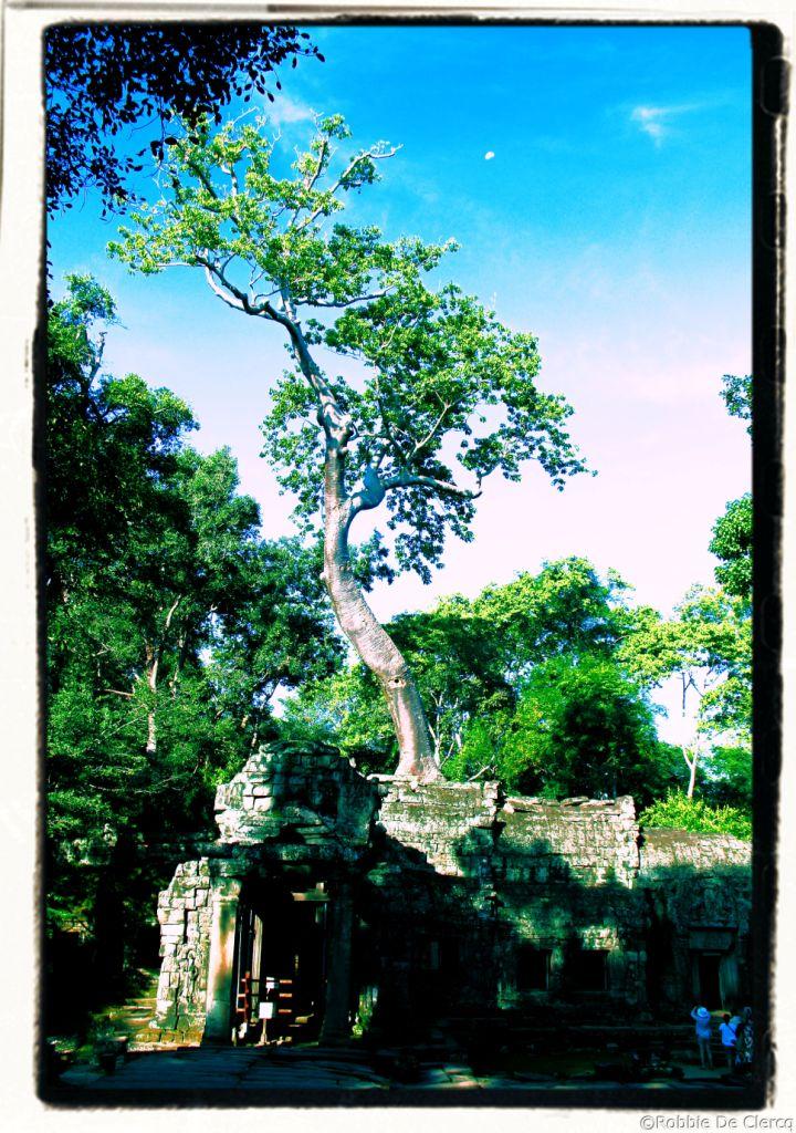 Ta Phrom (6)