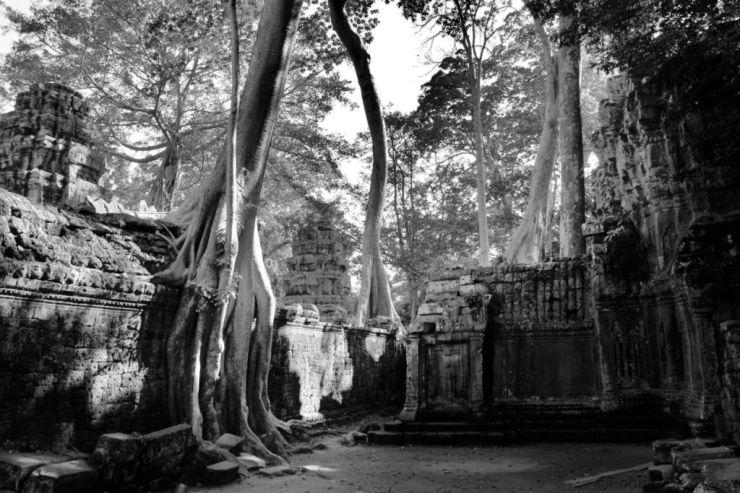 Ta Phrom (69)