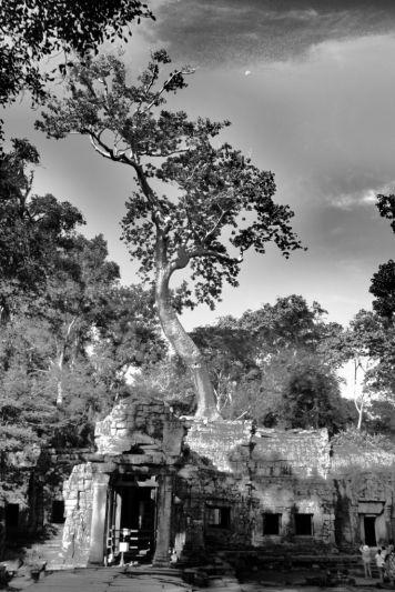 Ta Phrom (7)