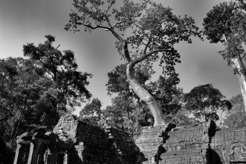 Ta Phrom (84)