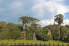 Terras van de Olifanten (3)