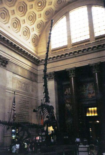 Barosaurus 02