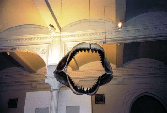 Bek van een haai