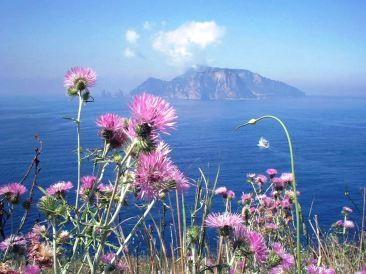 Capri 11