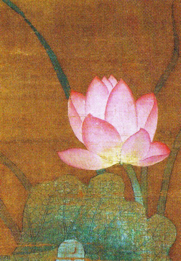Chinese Piling School - Lotus - 1302