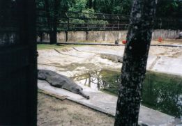 Chitwan 11