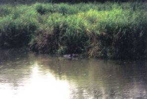 Chitwan 19