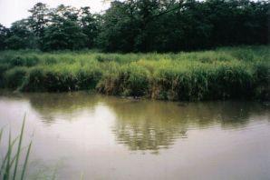 Chitwan 20