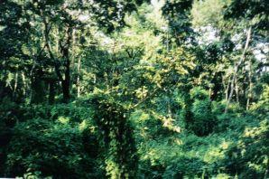 Chitwan 21