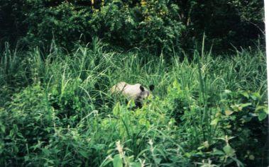 Chitwan 24