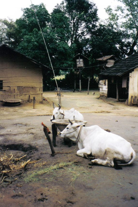 Chitwan 25