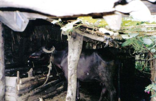 Chitwan 27