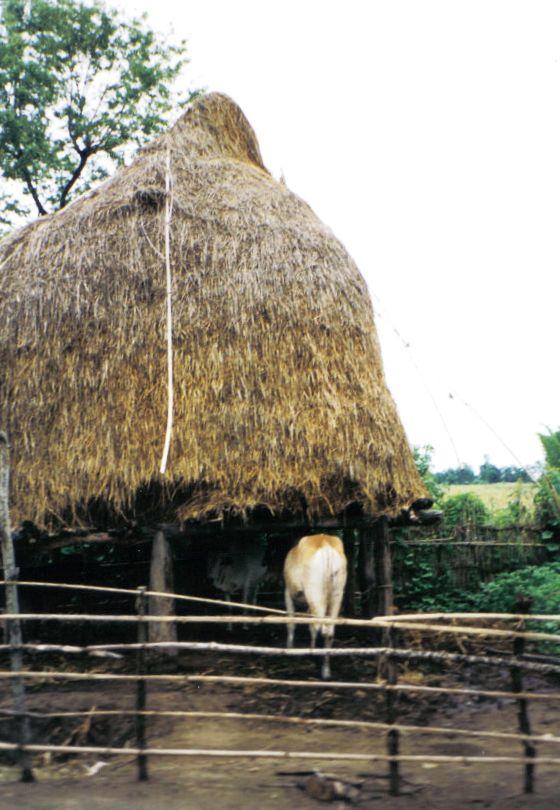 Chitwan 28