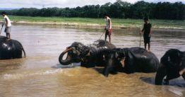 Chitwan 31