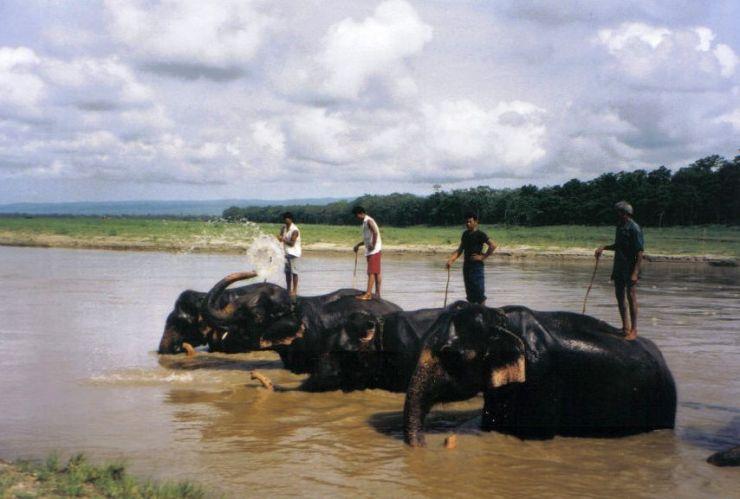 Chitwan 32
