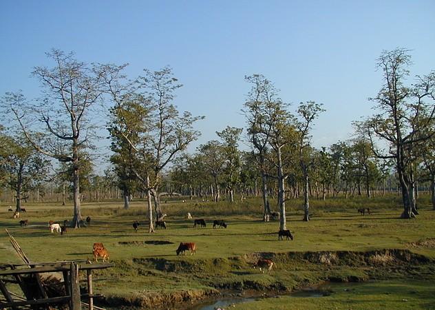 Chitwan 36
