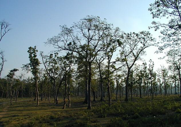 Chitwan 37