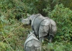 Chitwan 43