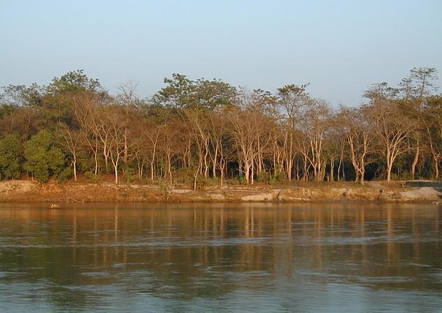 Chitwan 50