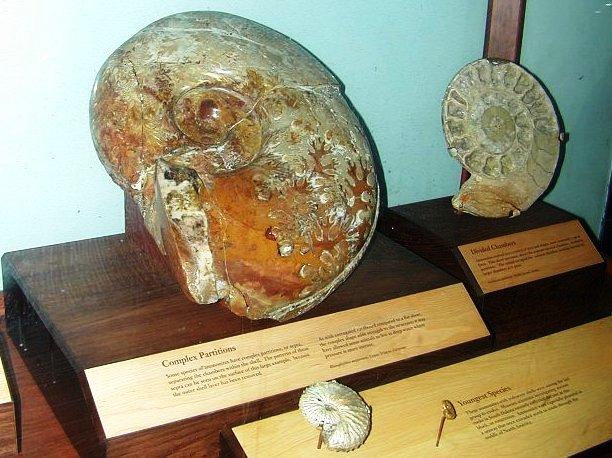 Fossiele reuzenslakken