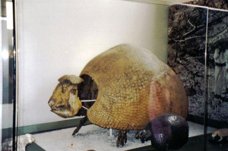 Glyptodont
