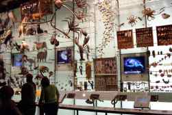 Hall of Biodiversity 01