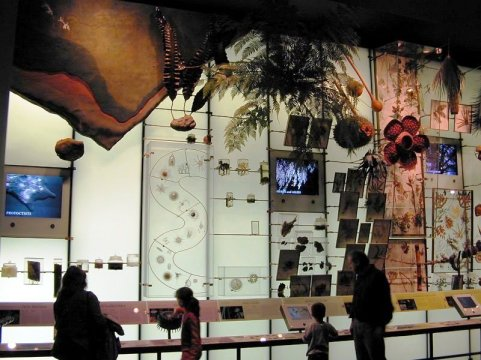 Hall of Biodiversity 02