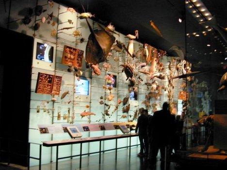 Hall of Biodiversity 03