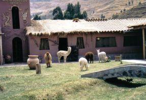 Lima 14