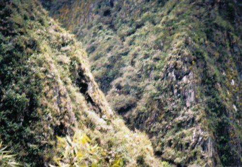 Macchu Picchu 05