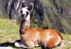Macchu Picchu 30