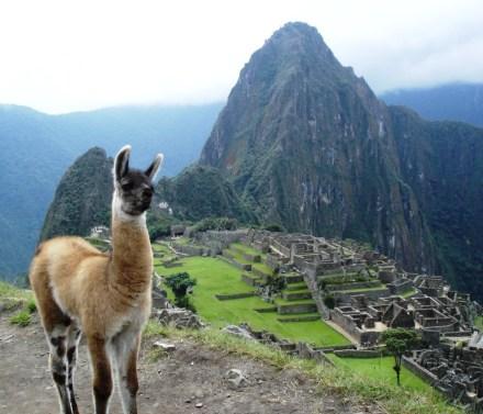 Macchu Picchu 34