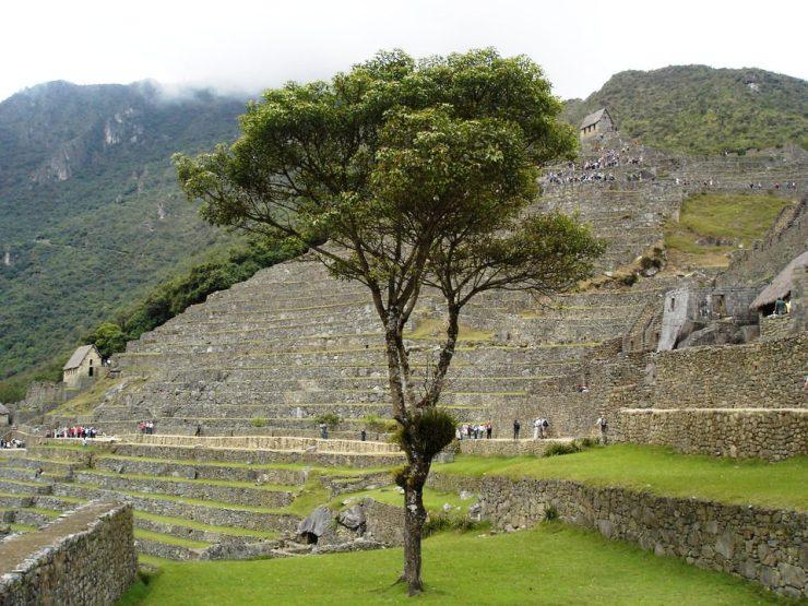 Macchu Picchu 63