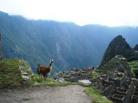 Macchu Picchu 68