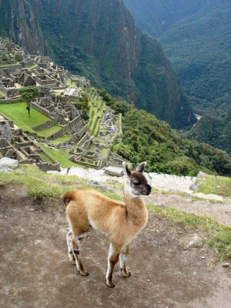 Macchu Picchu 69