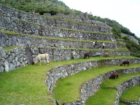 Macchu Picchu 70