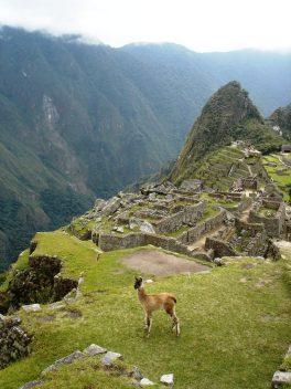 Macchu Picchu 71