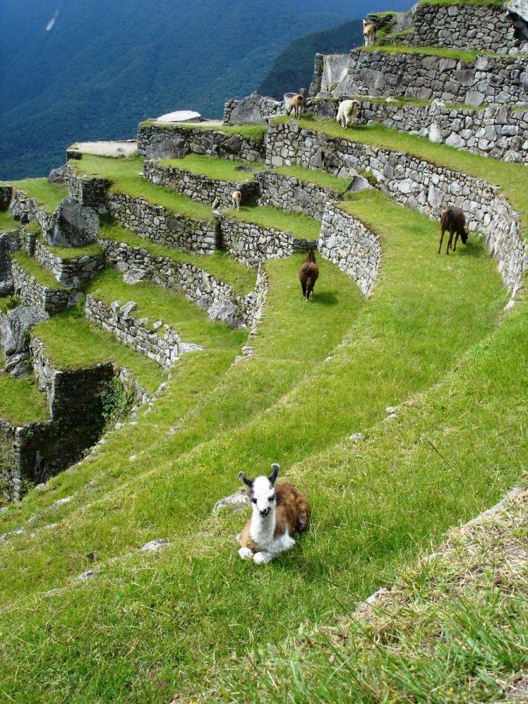 Macchu Picchu 73