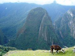 Macchu Picchu 76