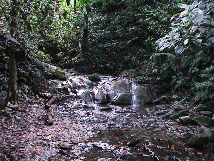 Palenque 46
